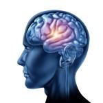 Según un nuevo estudio, comer menos es bueno para el cerebro