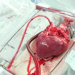 'Heart In A Box', tecnología que permite que el corazón siga latiendo fuera del cuerpo humano